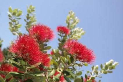 flower-141639__340